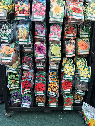 Summer flowering bulbs corms and tubers. 10 packets our selection for £10 saving over £20