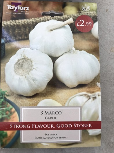 Garlic  Marco x3 Bulbs