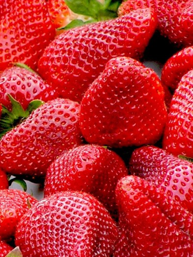 Single strawberry plants - our selection