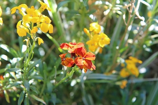 Wallflowers 6 pack Tall Mixed